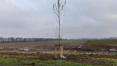 Photo of Volop bomenplant in Hollands Kroon